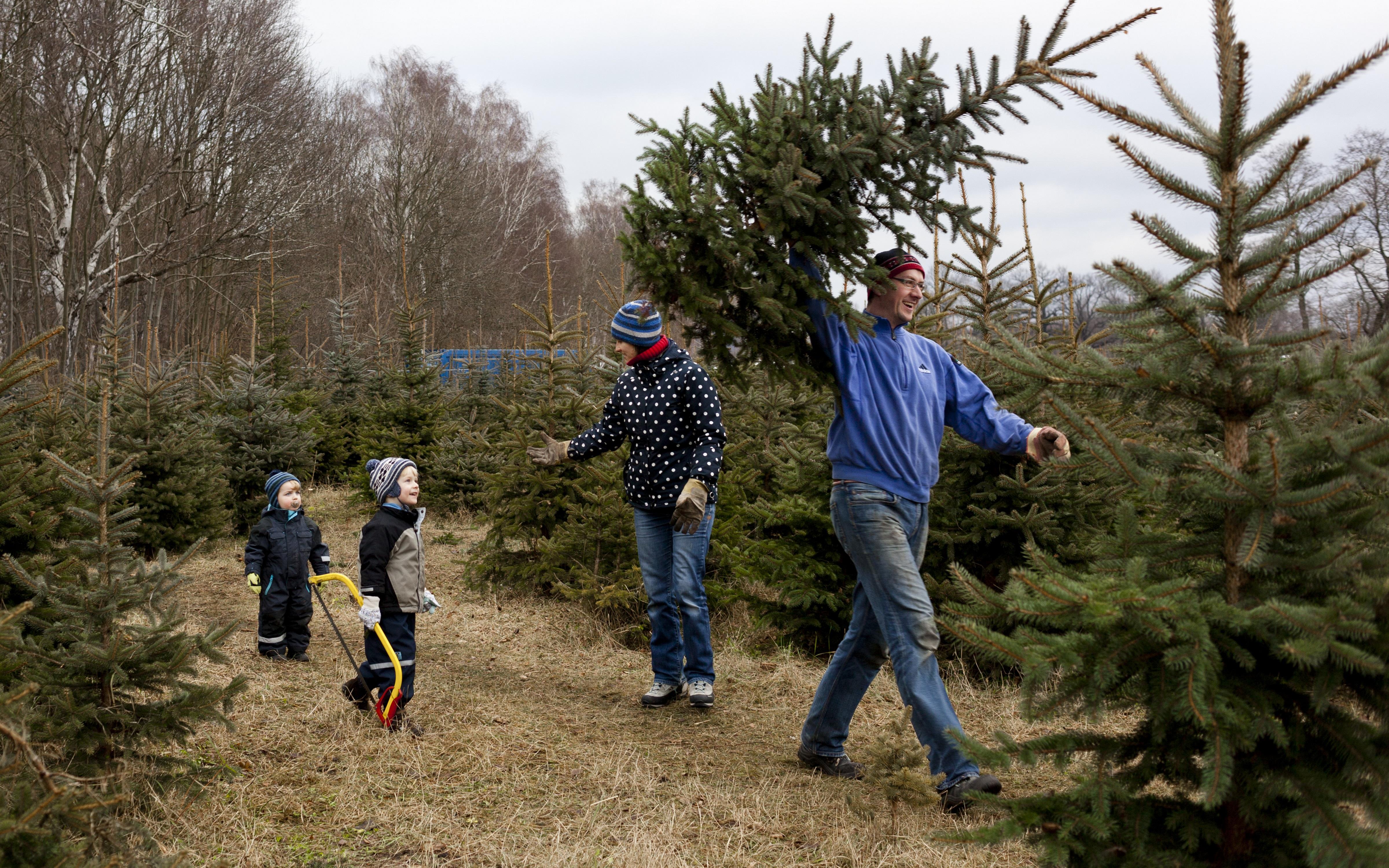 Weihnachtsbaum Selber Schlagen Berlin Brandenburg.Weihnachtsbäume Selber Schlagen In Brandenburg 2018